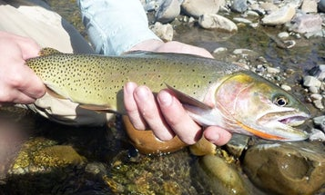 Road-Tripping for the Cutthroat Trout Slam in Wyoming