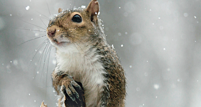 Small Game: Late-Season Squirrel Hunting Tips