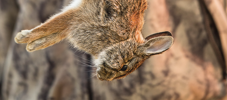 Had Enough of Your Treestand? Get Out and Bounce Some Bunnies
