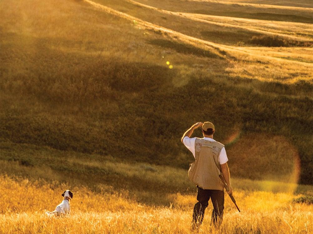 hunter watches bird dog public land