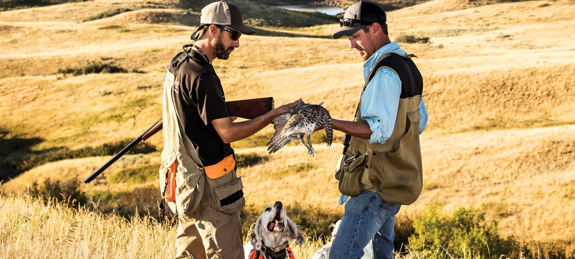 The Native Bird: Chasing Sharptails on BLM Land in Montana