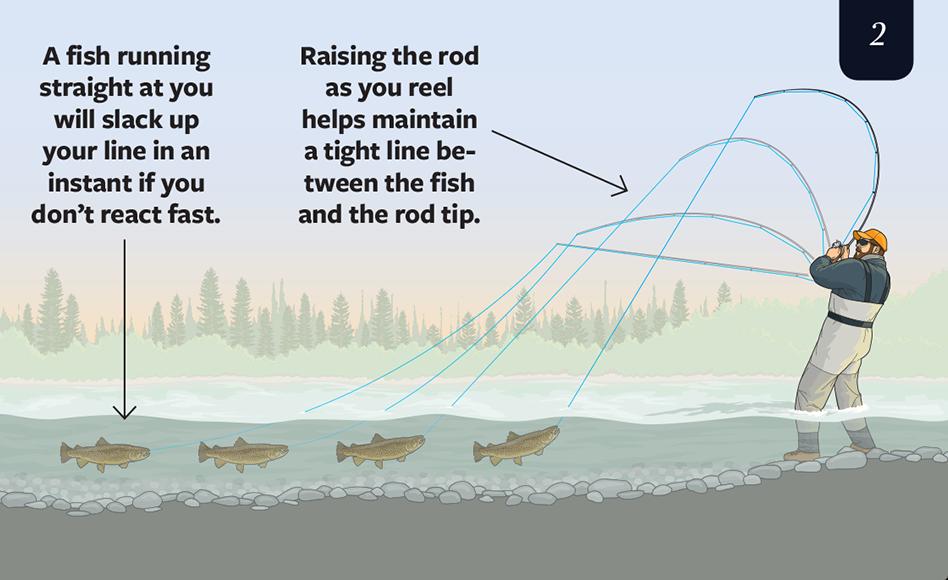 landing big trout,