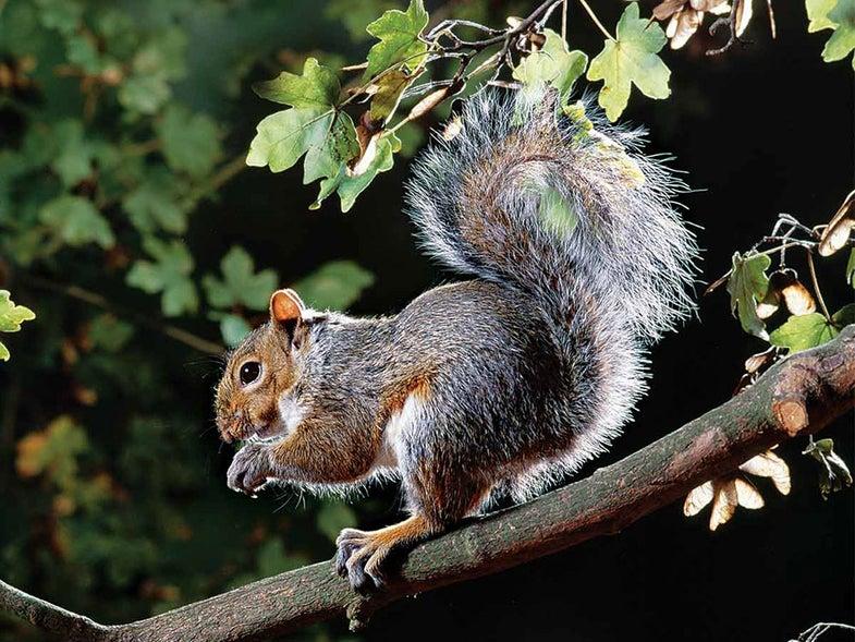 hunting, squirrel hunting, guns, will brantley