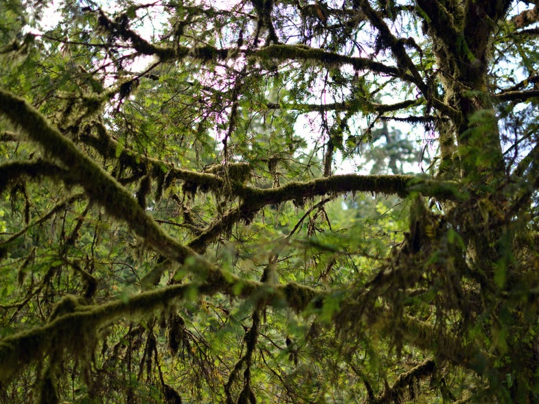 Public Lands and the Lesson of the Yew
