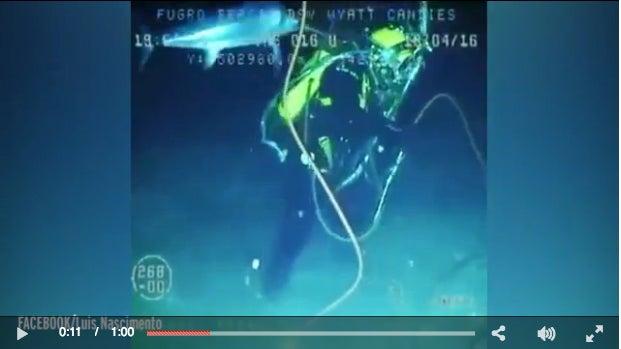 Video: Swordfish Attacks Deep Sea Diver