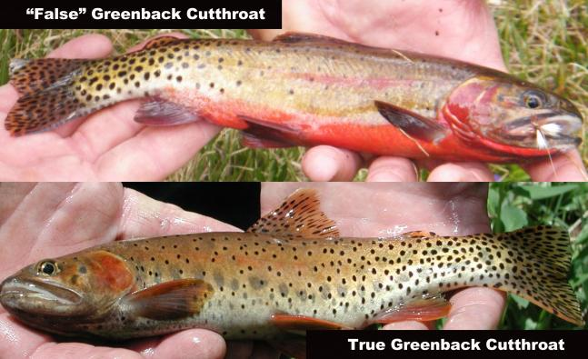 httpswww.fieldandstream.comsitesfieldandstream.comfilesimport2014importBlogPostembedgreenbacks.jpg