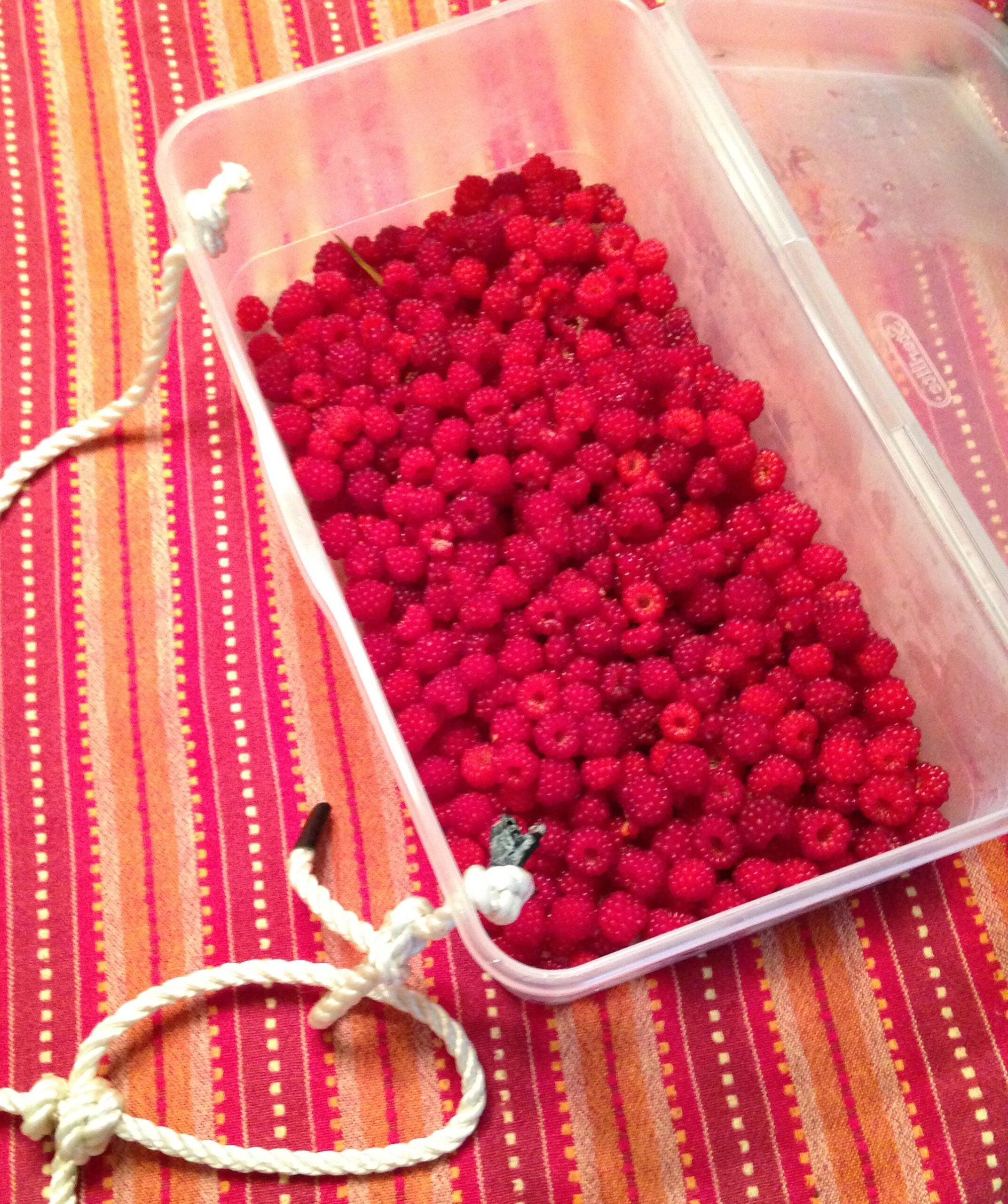 Wild Wineberries Are In Season