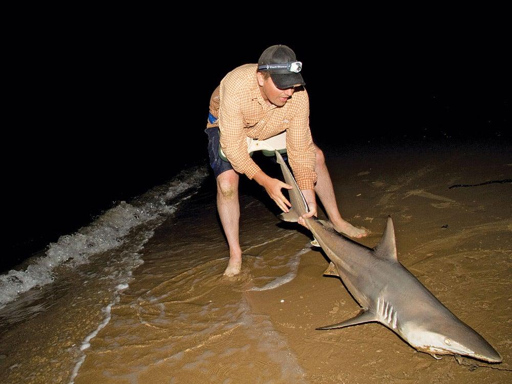catch a shark shore fishing