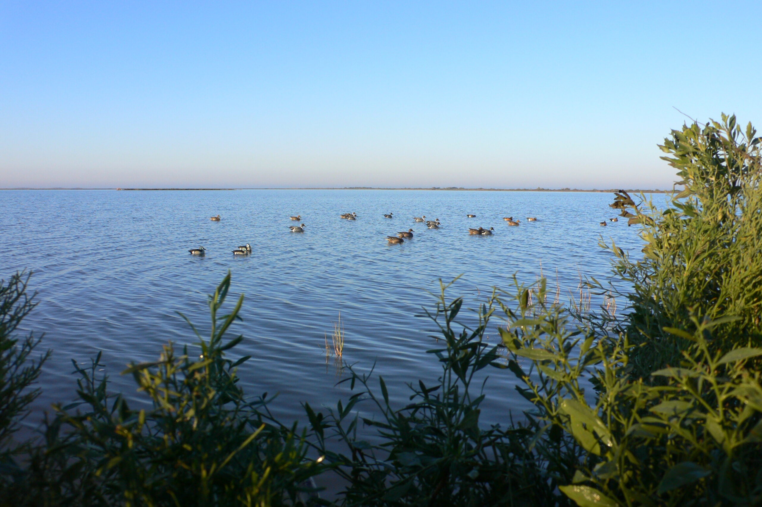 Trip Report: Texas Duck Hunting At Bay Flats Lodge