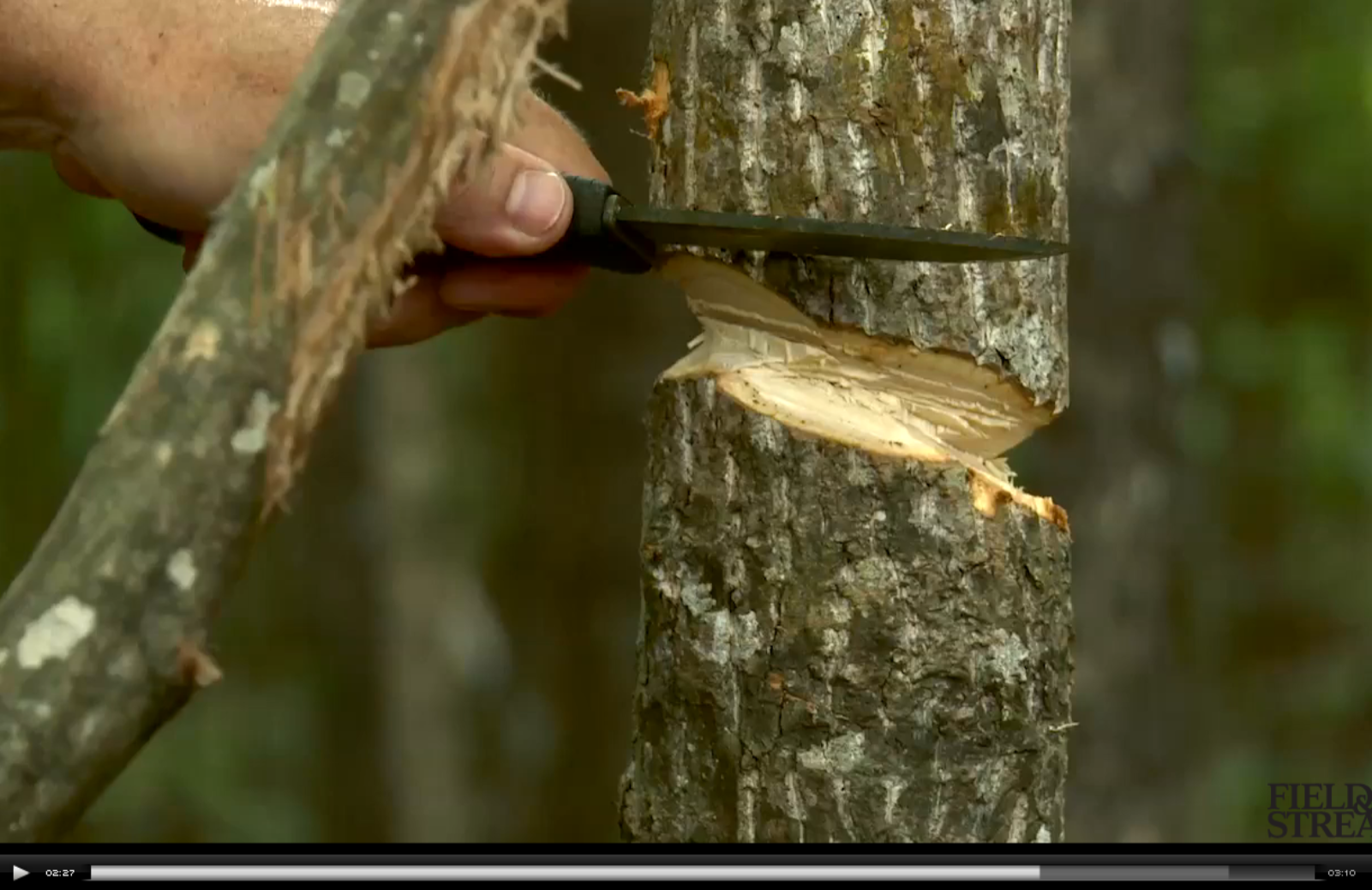 Video: How to Fell a Tree With a Knife