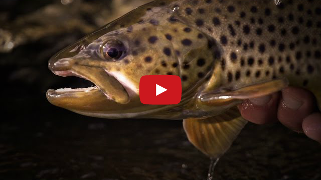 Testify: A Visual Poem of Trout Fishing