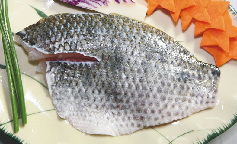 Turns Out Tilapia Are More Than Just Delicious, They'll Heal Your Wounds