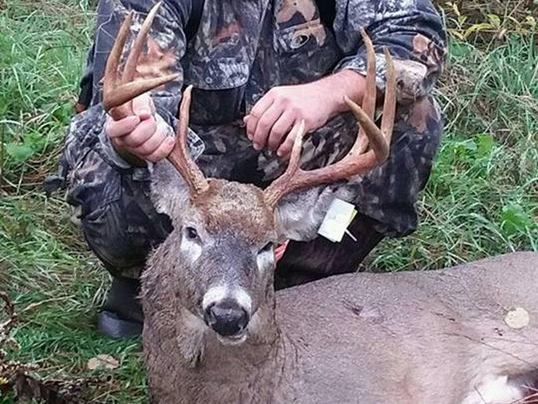 Bucks Chasing in the Northeast