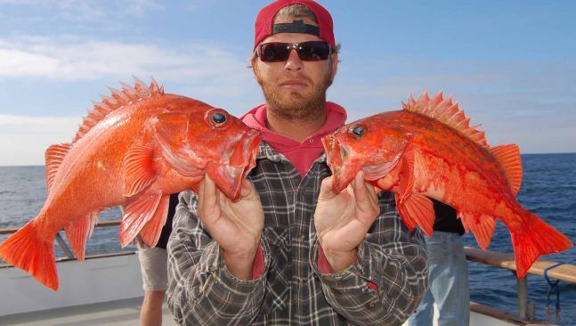 httpswww.fieldandstream.comsitesfieldandstream.comfilesimport2014importBlogPostembedrockfish.jpg