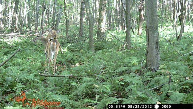 Trail Cam Photos: The 50 Best Wildlife Shots from Our 2012 Fall Contest (Round II)