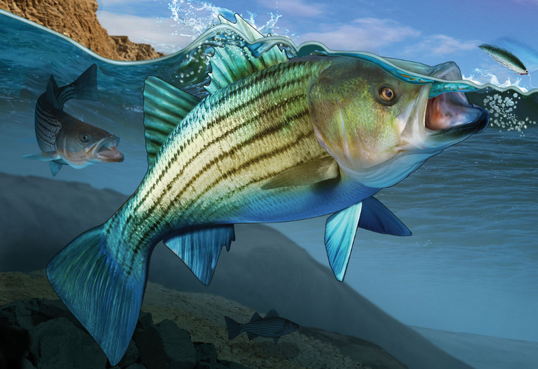 How to Land a Trophy Striper on the Fly