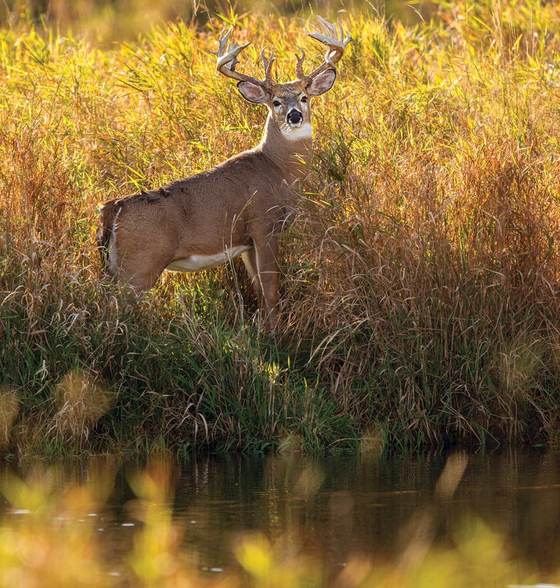 Breakout Bow Season: Take a Trophy Buck on Public Land … Right Next to the Road