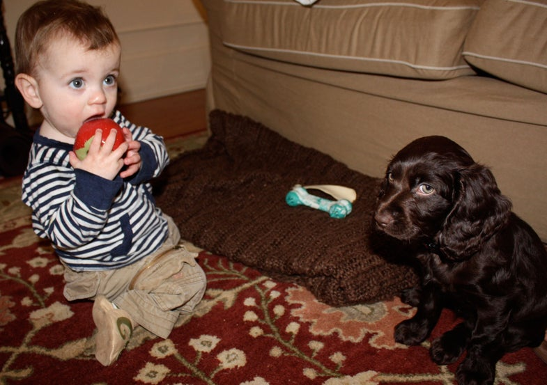 Pups vs. Toddlers: A Training Stalemate
