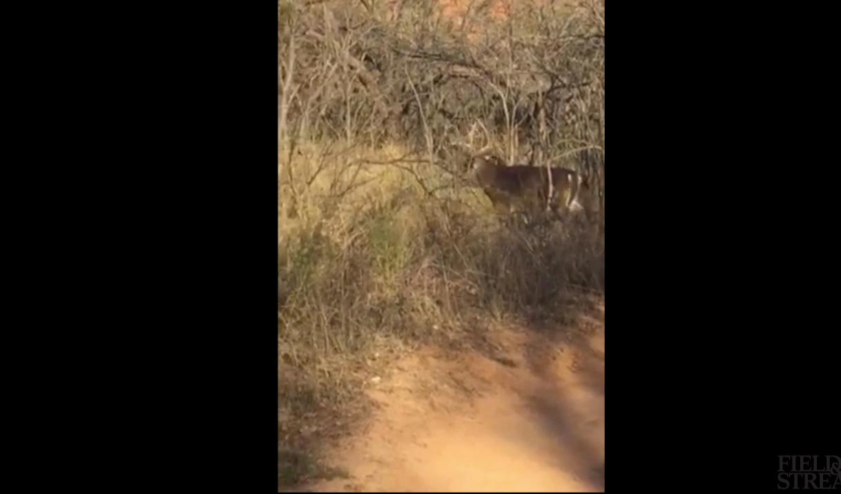 Giant Texas Buck On Trail Camera, Big Boys Should Be Wandering