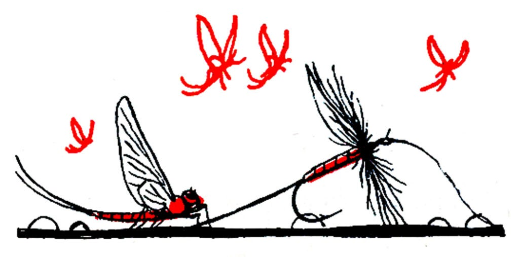 dry flyfishing tips