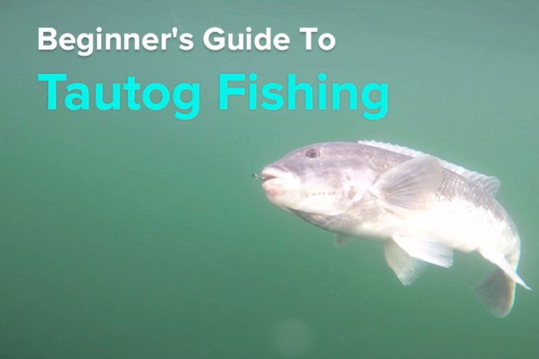 Video: Beginner's Guide to Tautog Fishing