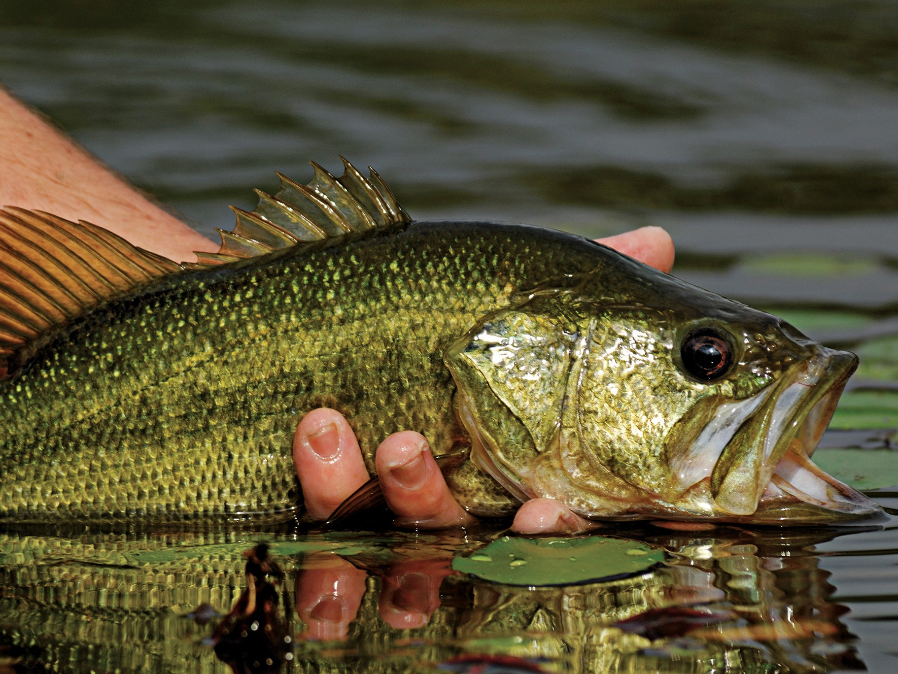 Hook More Bass, Trout, and Pickerel With In-Line Spinners