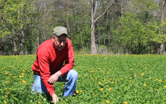httpswww.fieldandstream.comsitesfieldandstream.comfilesimport2014importBlogPostembedClover_patch_-April_2012.jpg