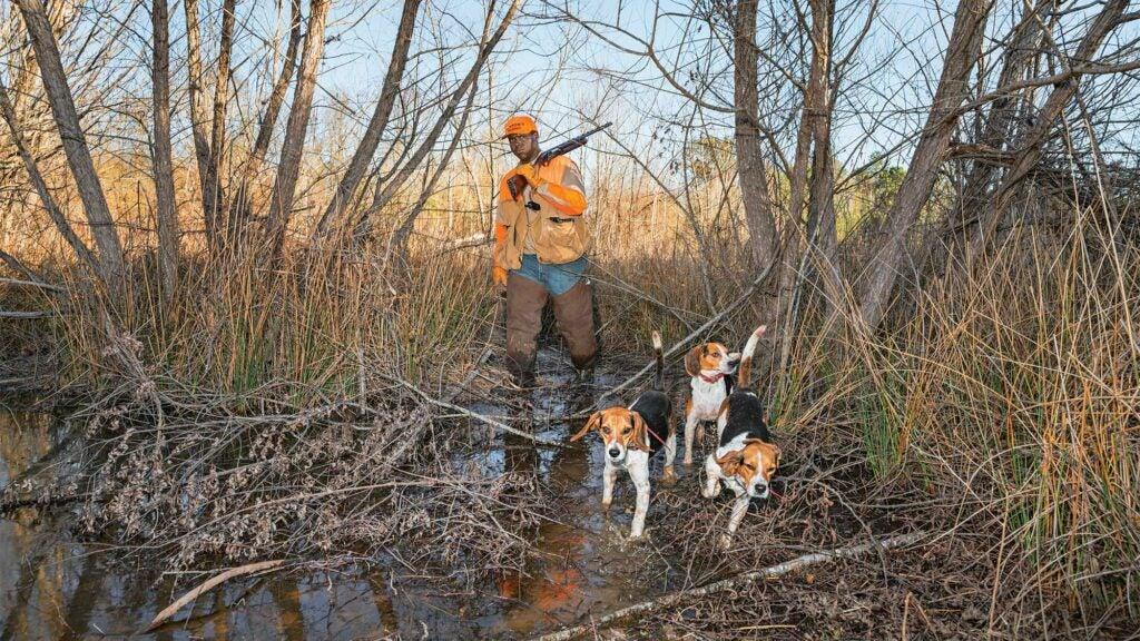 buchanon beagles rabbit hunting