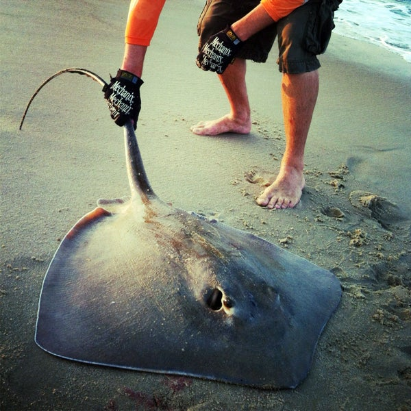 httpswww.fieldandstream.comsitesfieldandstream.comfilesimport2014importImage2012photo23cb2_Big_Southern_Ray.jpg