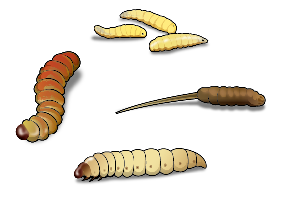 """Four Best """"Worms"""" for Ice Fishing and How to Use Them"""