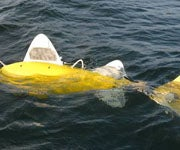 Scientists Develop Robot Fish to Improve Pollution Monitoring