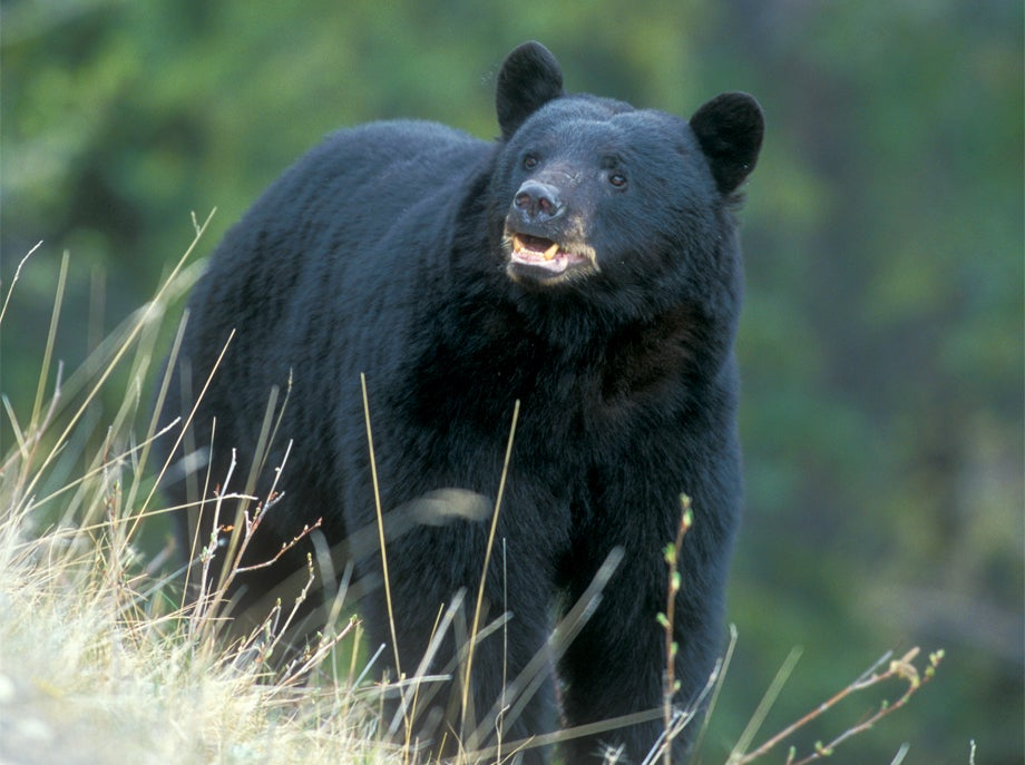 DIY: 3 Tips for a Budget Black Bear Bowhunt