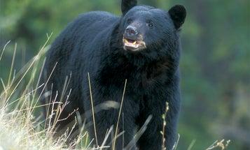 DIY: 3 Tips for a Budget Black Bear Bowhunt