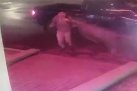 Video: Deer Pancakes Unsuspecting Man in Parking Lot