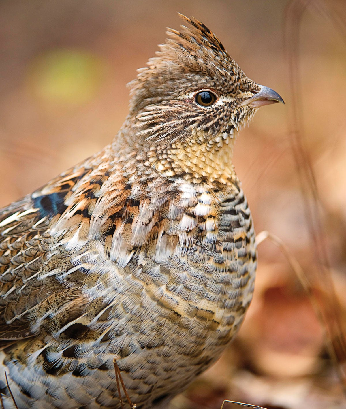 Switch Hit: How to Transition Between Your Deer Rifle and Grouse Shotgun