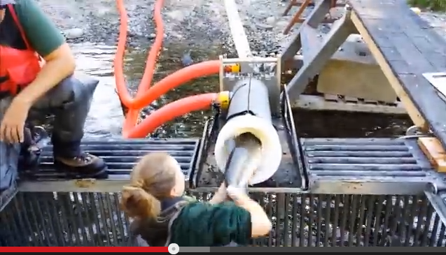 Video: Whooshh Fish Transport System, A.K.A. The Salmon Vacuum