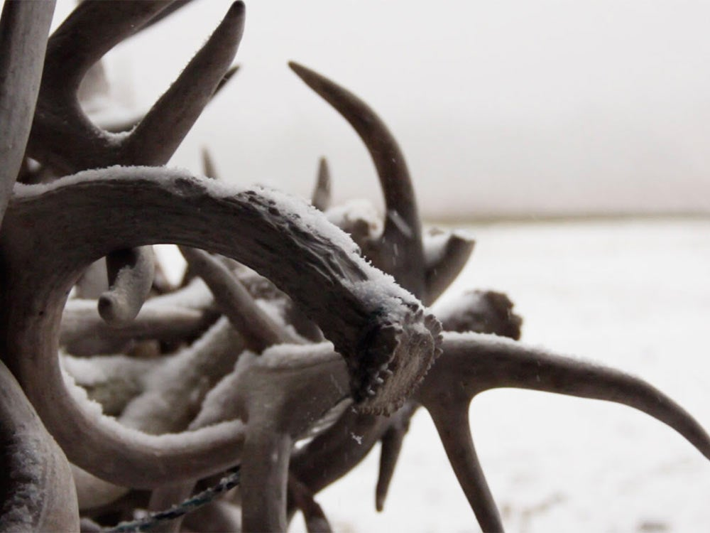 tangle of shed antlers