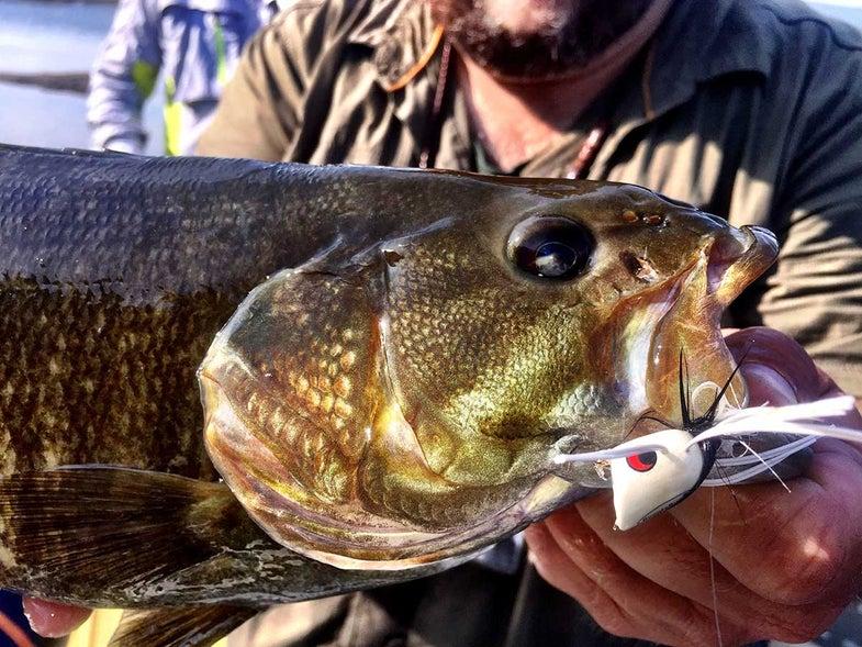 bass fishing flies, best bass fishing swimbaits