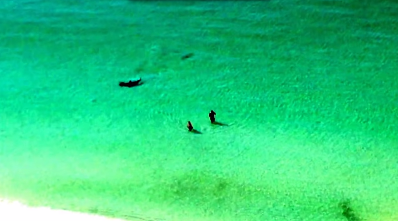Swimmers Ignore Shark Warning, Until They Realize It's Not a Joke