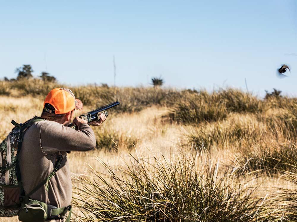hunter shooting at quail