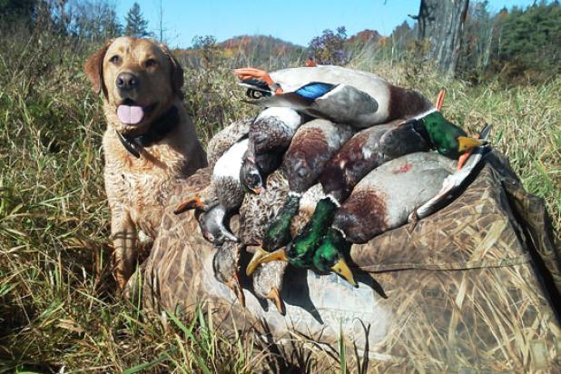 httpswww.fieldandstream.comsitesfieldandstream.comfilesimport2014importBlogPostembedHurricane_Sandy_Duck_Hunting.jpg