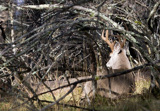 Find These 6 Types of Deer Beds to Zero In On Big Bucks