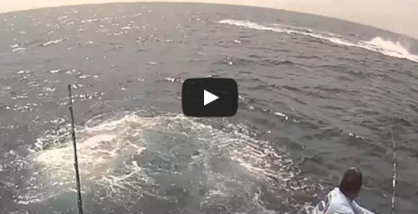 Here's What A 1,058-Pound Marlin Looks Like Going Nuts On The End Of Your Line