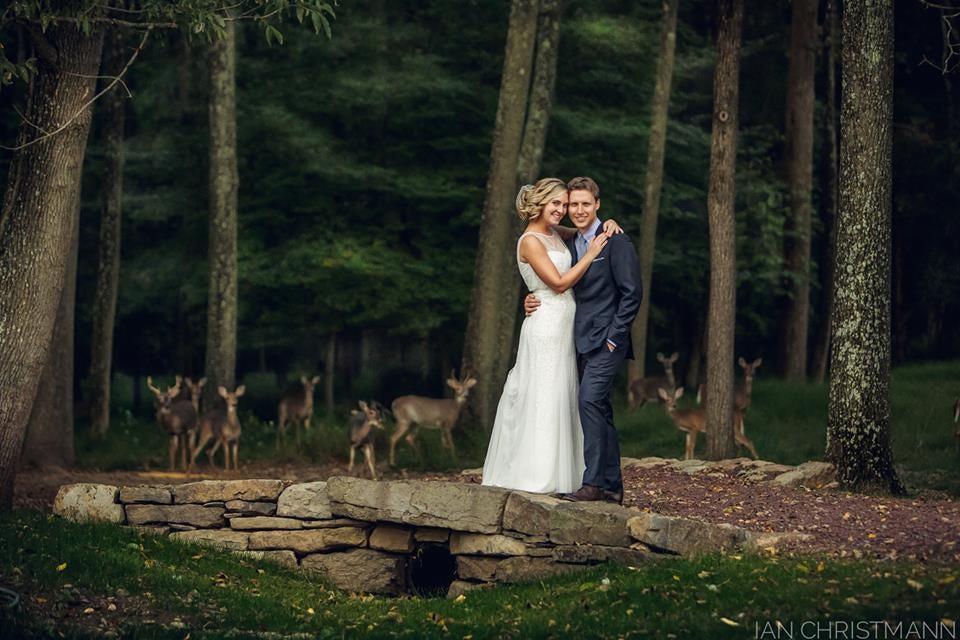 Deer Photobomb Wedding Shots