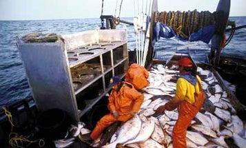 Freedom to Overfish