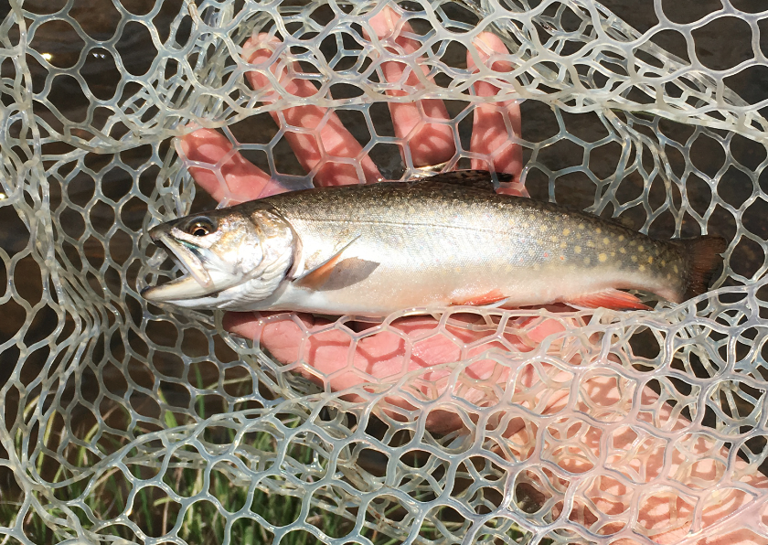 New Mexico's Greatest Little-Known Trout Stream