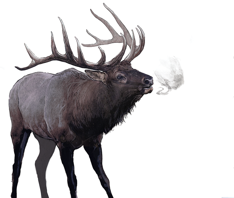 How to Field Judge Record-Class Elk