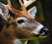 Deer Hunting Tip: Don't Wear Blue (Or Solid Green)