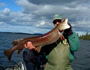 Bruce Johnston hauled in this 48-inch pike from Misaw Lake in Saskatchewan last July.