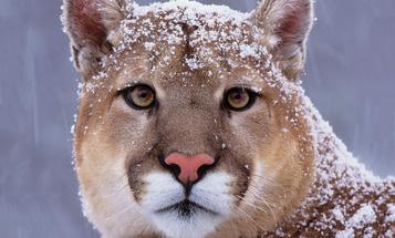F&S Classics: Lions of Winter